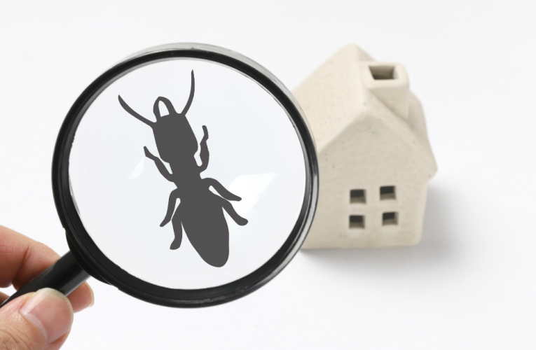 Pest Prevention 101